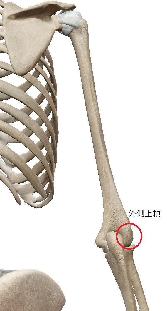 上腕骨外側上顆とは