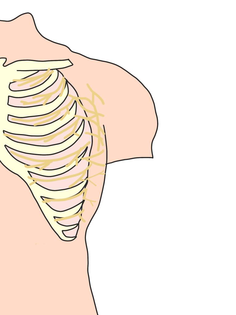 肋間神経とは