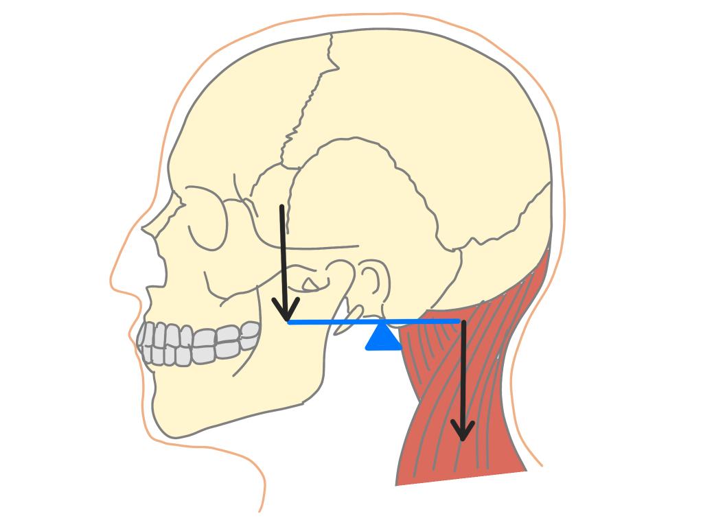 頭の重心の位置