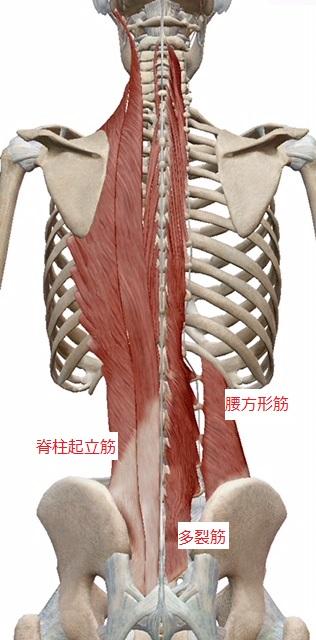 腰痛の原因になりやすい筋肉