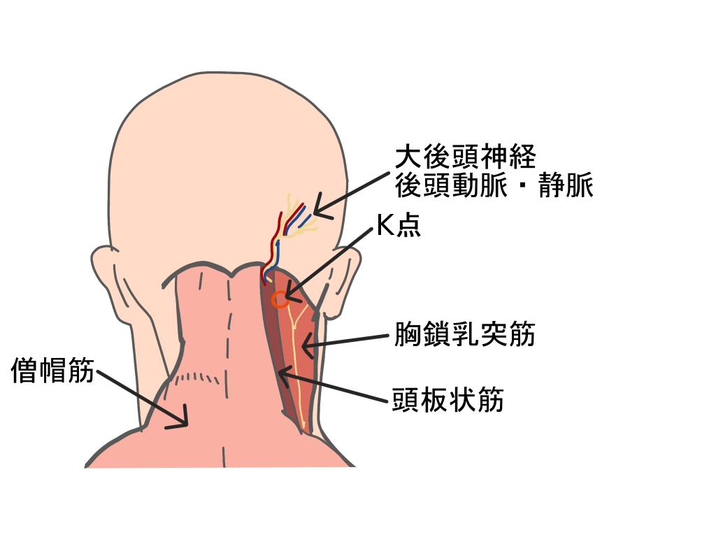 胸鎖乳突筋K点とは