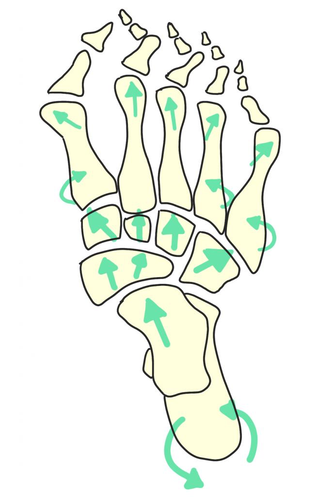 足のアーチの崩れ【金沢市のアルコット接骨院の疾患解説(足の裏の痛み)】