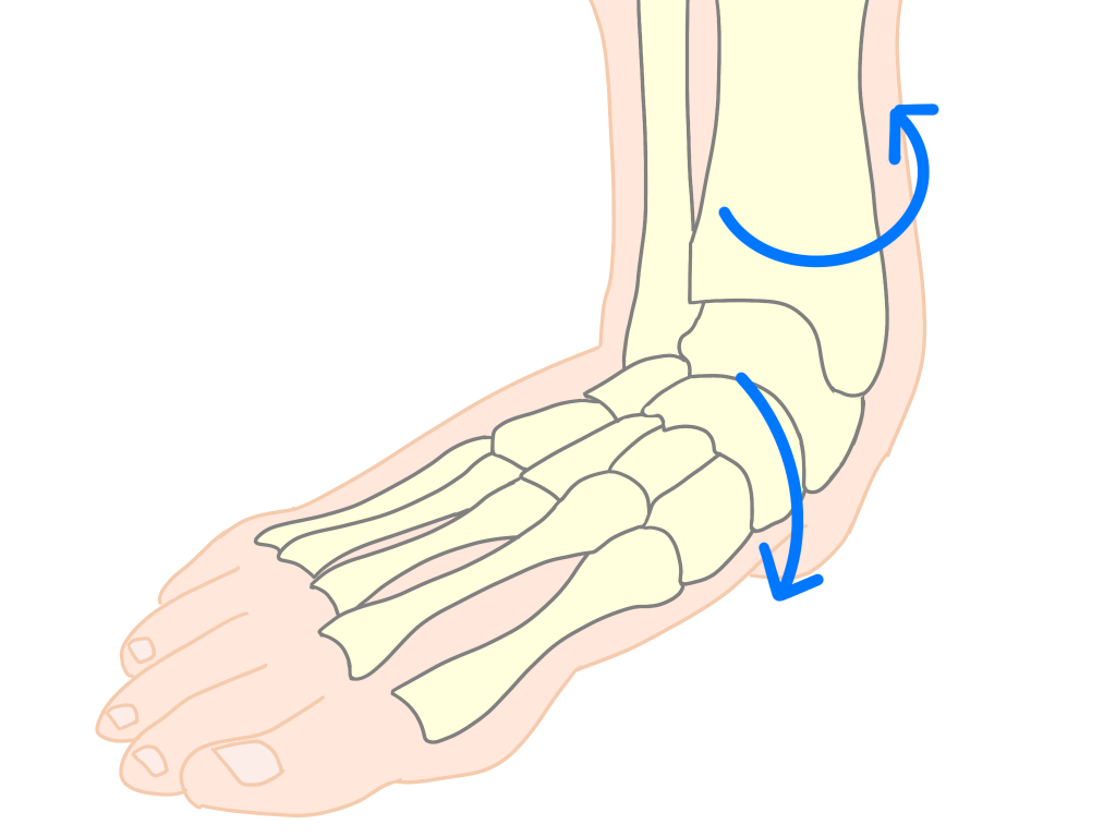 有痛性外脛骨障害 足部の回内【金沢市のアルコット接骨院の疾患解説(足の裏の痛み)】