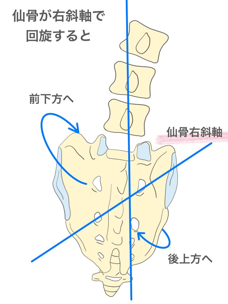 仙骨が右斜軸で回旋すると