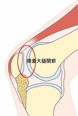 膝蓋大腿関節とは