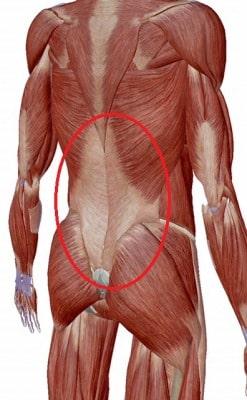 腰背腱膜とは