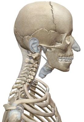 頸椎の構造
