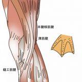 鵞足炎・鵞足包炎の原因や治療法【金沢市アルコット接骨院】