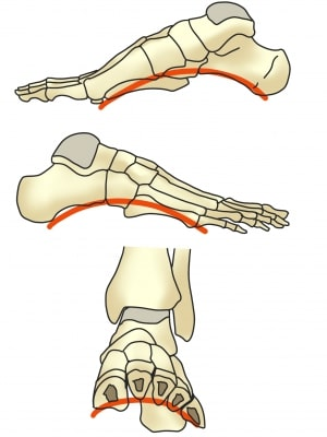 足の3つのアーチ(外反母趾・内反小趾)