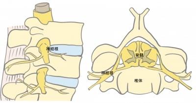 頸椎の解剖