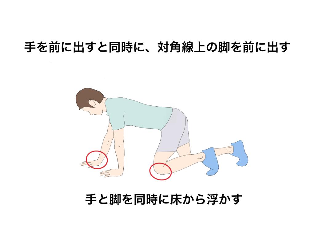 ベアクロール動き方【金沢市アルコット接骨院】