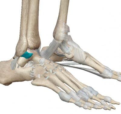 前距腓靭帯とは