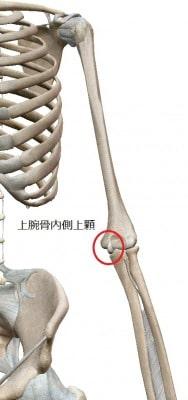 上腕骨内側上顆とは